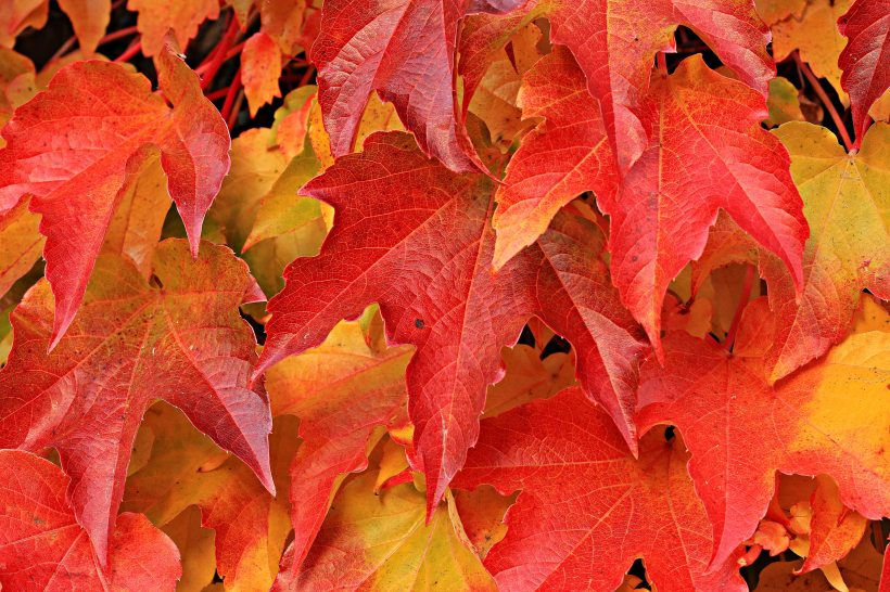 autumn-autumn-colours-autumn-leaves-235767.jpg